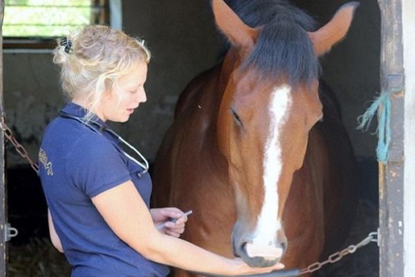 Equine Influenza Vaccinations